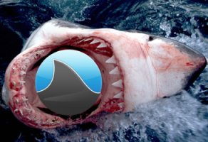 Grooveshark Among the Sharks